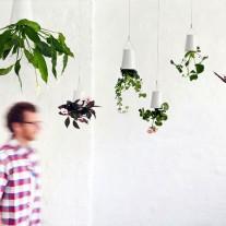 boskke-skyplanter-03