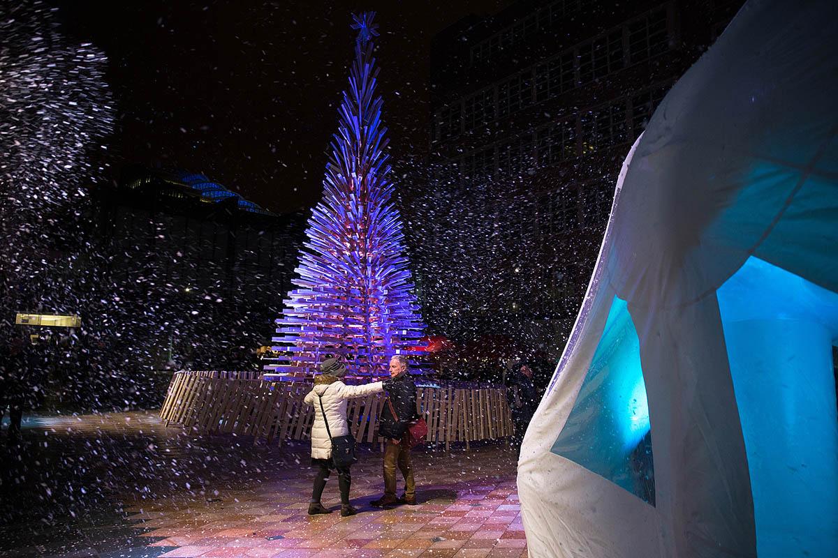 Christmas Trees 3
