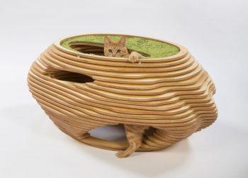 01-abramson-teiger-architects-cat-shelter