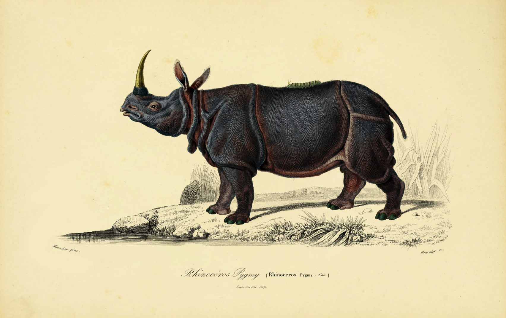 The-Museum-Extinct-Animals-Moooi-Arte-02