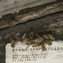 Bee-Saving-Paper-Saatchi-Saatchi-Filip Zolynski-PRINCIPAL