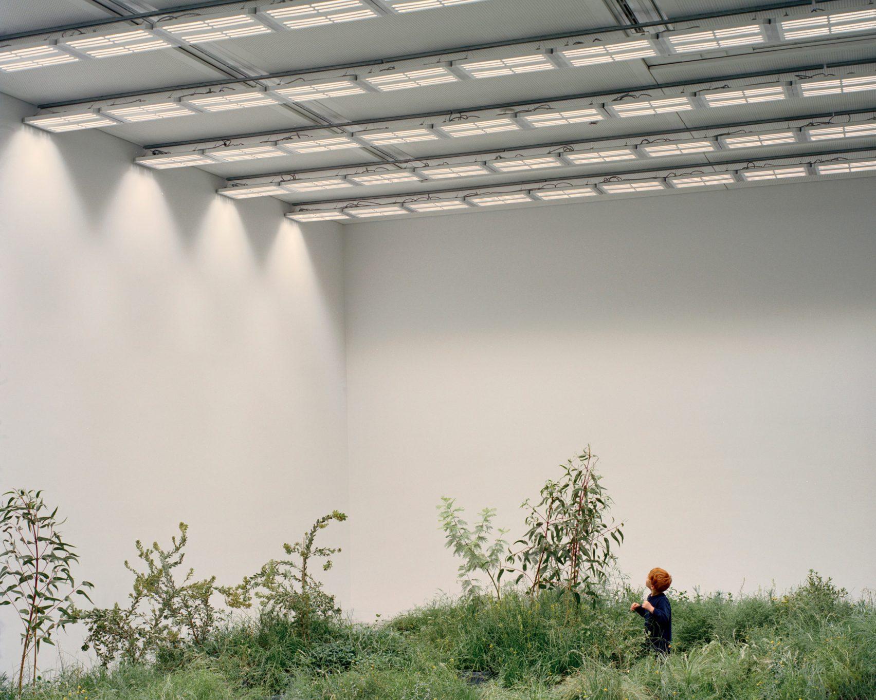 Grasslands-Repair-Pabellon-Australia-Venecia-Baracco-Wright-Rory-Gardiner-02