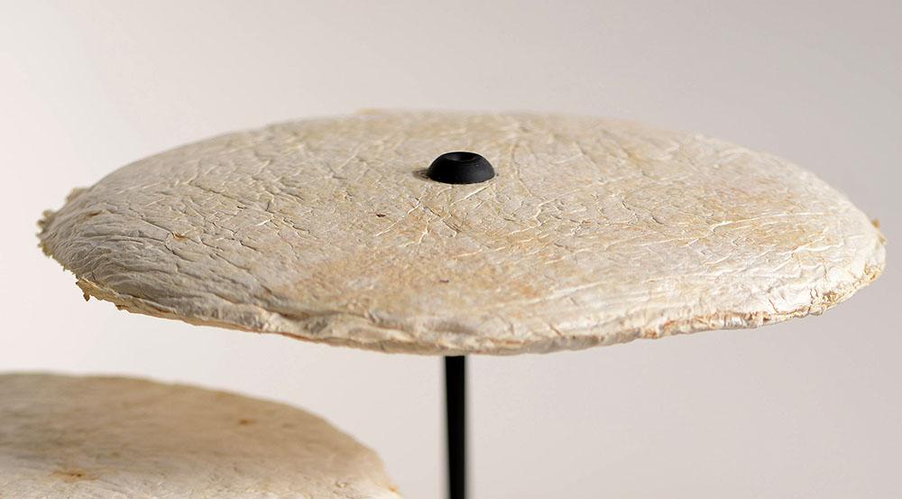 mycelium-nir-meiri-03