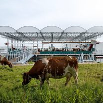 Floating-Farm-Dairy-Goldsmith-06