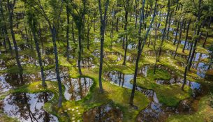 Art-Biotop-Water-Garden-Junya-Ishigami-Nikissimo-01