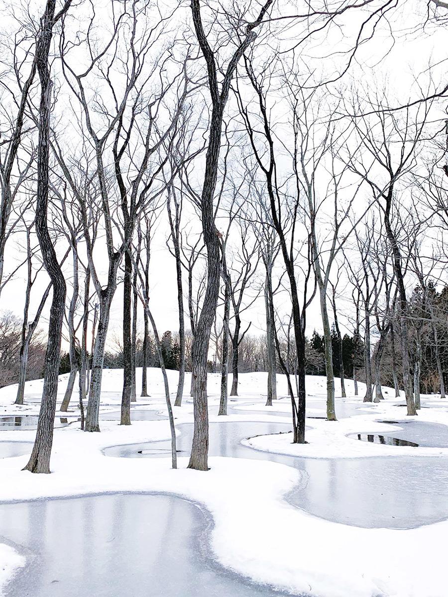 Art-Biotop-Water-Garden-Junya-Ishigami-Nikissimo-05